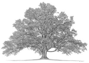 Family Tree_640