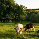 Westovers in Somerset England